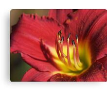 Red Lily Stamens Canvas Print