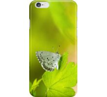 Spring Azure Butterfly iPhone Case/Skin