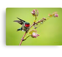 On a Wing and a Prayer Hummingbird Art Canvas Print
