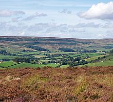 Rosedale by John (Mike)  Dobson