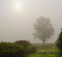 Foggy Morning Sunrise Landscape by Christina Rollo