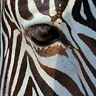 Eye of the Zebra by krishoupt