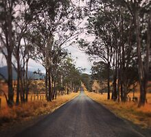 A tree lined rural road by MattLawson