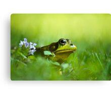 Wild Green Frog Canvas Print