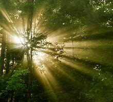 Sunlight Through the Trees by Christina Rollo