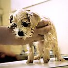 Hate the bath...!! by Roz McQuillan