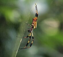 Golden Silk Spider by Carol Bailey White