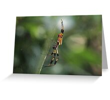 Golden Silk Spider Greeting Card