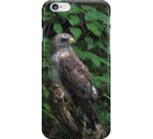 Hawk, Broad-Winged iPhone Case/Skin