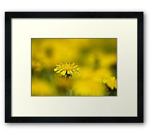 Yellow on Yellow Dandelion Framed Print