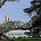 Sydney City Scape (2) by Wolf Sverak