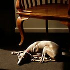 Whippet! by Roz McQuillan