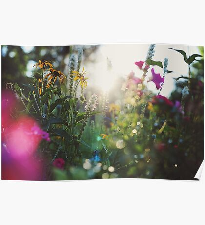 Fleurs sauvages Poster