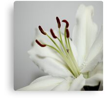 White Lily in Macro Canvas Print