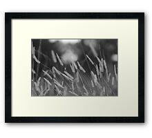 waving wheat  Framed Print