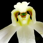 Chef - Orchid Alien Discovery by ©Ashley Edmonds Cooke