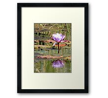 Lilac Water Lily - Tropical Bird Park, Kalbarri, WA Framed Print