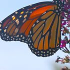 Tiffany wings by MarianBendeth