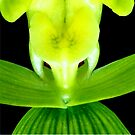 EEK! - Orchid Alien Discovery by ©Ashley Edmonds Cooke