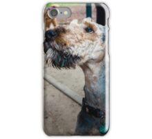 Airedale XXIII - Chewie iPhone Case/Skin