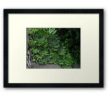 Succulent Patch Framed Print