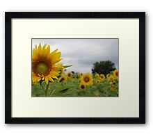 Amazed in a Maze Framed Print