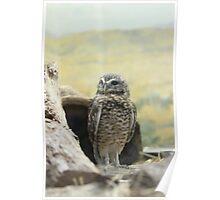 In His Natural Habitat Poster