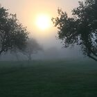 The Apple Orchard At Sunrise by Geno Rugh