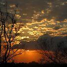 A wonderful new day by Elizabeth Kendall