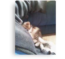 Sleeping kittens Canvas Print