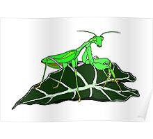Green Asian Praying Mantis Poster