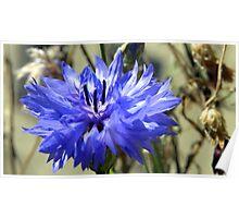 BEAUTY BLUE Poster