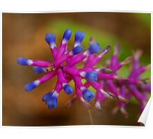 Matchstick plant Poster