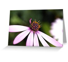 Missing Petals Hey Daisy Greeting Card