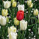Tulips (4) by Wolf Sverak