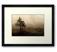 16.8.2014: Pine Trees, Summer Morning Framed Print
