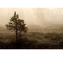 16.8.2014: Pine Trees, Summer Morning Photographic Print