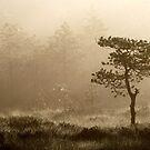 16.8.2014: Pine Tree, Summer Morning II by Petri Volanen