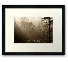 16.8.2014: Pine Trees, Summer Morning II Framed Print
