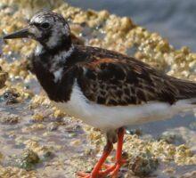 Bird at Long Reef NSW Sticker