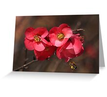 Yum - Flowering Quince Greeting Card