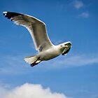 Gull by JEZ22