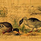 Mallards and Swan Collage by Sarah Vernon