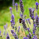 Lavender Bumblebee by Ludwig Wagner