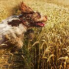 Brown Roan Italian Spinoni Dogs in Action III by heidiannemorris