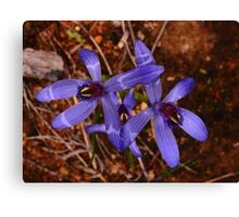 blue orchids Canvas Print