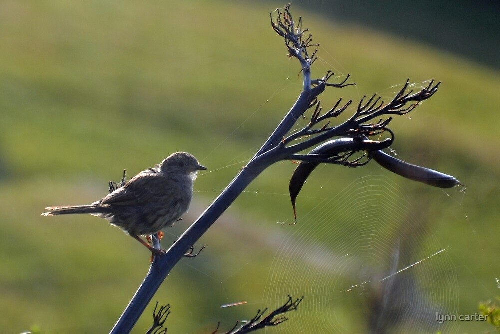 Bird In A Web................ by lynn carter
