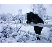 Horse in the snow Photographic Print