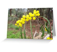 In Wattle Park Greeting Card