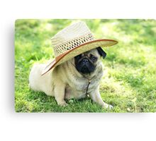 Young pug with a hat Canvas Print